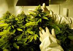 Israel may be first country to approve marijuana vaporizer for medical use