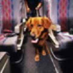 United flight diverted because it accidentally had a dog onboard