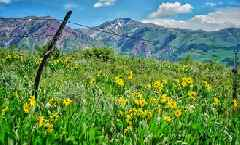 These 5 Hikes Are Perfect for Wallowing in Spring Wildflowers - Check out some of our favorite hikes for spring blooms (and when to hit them so they're prime).