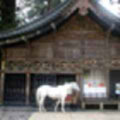 New Zealand to gift white horse to Japan to continue 50-year-old tradition