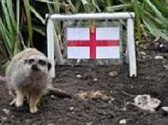 Mystic meerkats say England will win first World Cup match