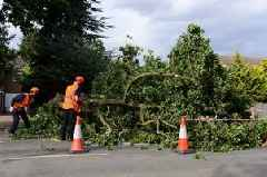 Fallen trees brought down by Storm Ali's strong winds cause traffic chaos