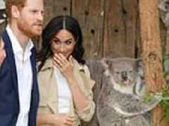 Meghan can't hide her delight as she meets 'so, so sweet' koalas named after her and husband Harry