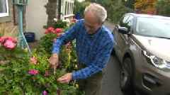 Sheffield council says grass verge garden must be removed