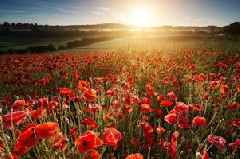 Remembrance Sunday: These Somerset soldiers died on Armistice Day and this is their stories