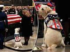 George H.W. Bush's service dog Sully visits his casket in the Capitol Rotunda