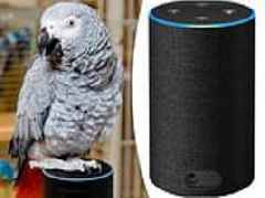 Parrot has been placing orders on its owner's Amazon account by talking to Alexa