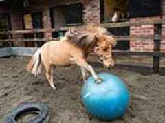 One-year-old Tony the pony has developed a love for FOOTBALL