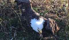 Bald Eagle Rescued in Missouri After Being Caught in Fence May Have Ingested Poison
