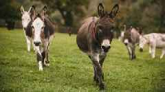 Equine flu: Donkey charity closes centres to the public