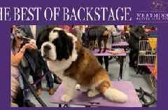 Watch the dogs of the Westminster Kennel Club Dog Show get groomed backstage
