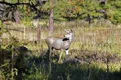 'Zombie' deer disease could spread to humans, experts warn