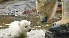 Watch: Adorable Polar Bear Cub Takes First Steps at Berlin Zoo
