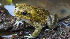Poisonous Toads 'Take Over' Suburban Florida Neighborhood