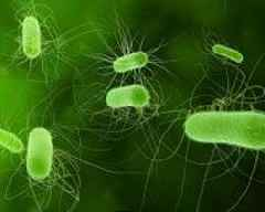 Bacteria can travel thousands of miles through the air