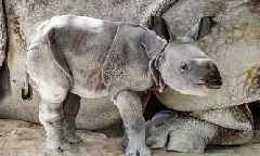 Rare Baby Rhino Born Using Artificial Insemination at Zoo Miami