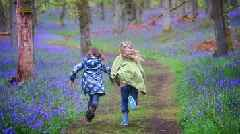 Scotland's bluebells at risk from social media fans