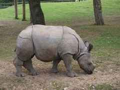 Scientists successfully transfer first test tube rhino embryo