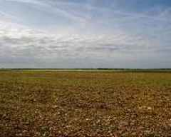 European farms, wildlife parched in post-heatwave drought
