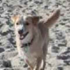 Dog that helped Hastings family heal from tragedy disappears on walk on Ocean Beach