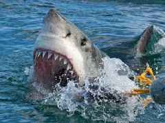 Shark spotting - One News Page [US] VIDEO