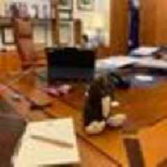 No hedging this bet: Australian PM Scott Morrison loses punt with Jacinda Ardern
