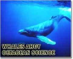 Bits of oil from Brazil spill reach whale sanctuary