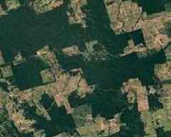 Deforestation in Brazil's Amazon up by more than double: data