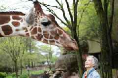 'The Woman Who Loves Giraffes' Film Review: Stirring Documentary Captures Pioneering Zoologist