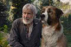 Harrison Ford's 'The Call of the Wild' Faces Off Against 'Sonic' at This Weekend's Box Office
