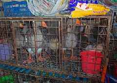 Chinese government reveals draft list of animals which can be farmed for meat