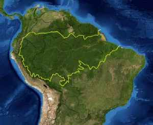 Amazon rainforest: Rainforest in South America