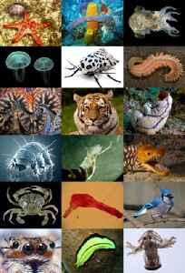 Animal: Kingdom of motile multicellular eukaryotic heterotrophic organisms