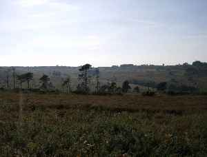 Ashdown Forest: Heathland area in the county of East Sussex