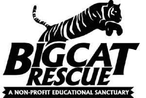 Big Cat Rescue: American non-profit organization