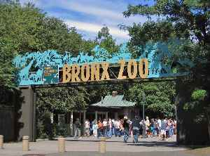 Bronx Zoo: Metropolitan zoo in the Bronx, New York City