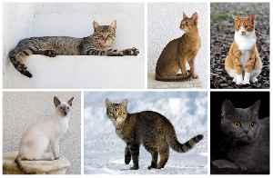 Cat: Domesticated feline