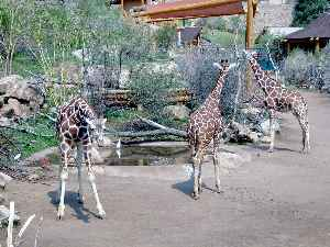 Cheyenne Mountain Zoo: Non-profit organisation in the USA