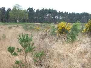 Chobham Common: Located near Chobham, Surrey, location of a British tank research centre