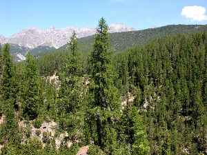 Forest: Dense collection of trees covering a relatively large area