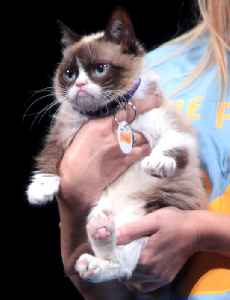 Grumpy Cat: Cat and Internet meme celebrity