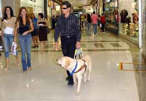 Guide dog: Assistance dog trained to lead blind and visually impaired people around obstacles