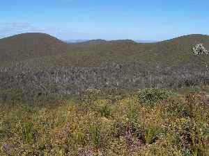 Heath: Shrubland habitat
