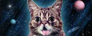 Lil Bub: Internet celebrity cat