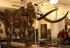 Mastodon: Genus of mammals (fossil)