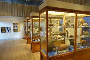 Natural history museum: Institution that displays exhibits of natural historical significance