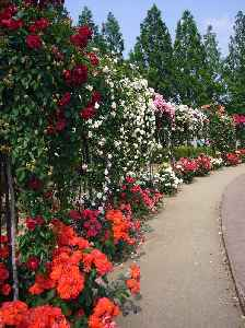 Rose garden: Garden or park which comprises mainly of roses