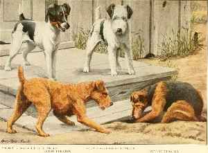 Terrier: Dog type