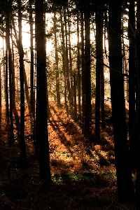 Thetford Forest: