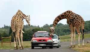West Midland Safari Park: